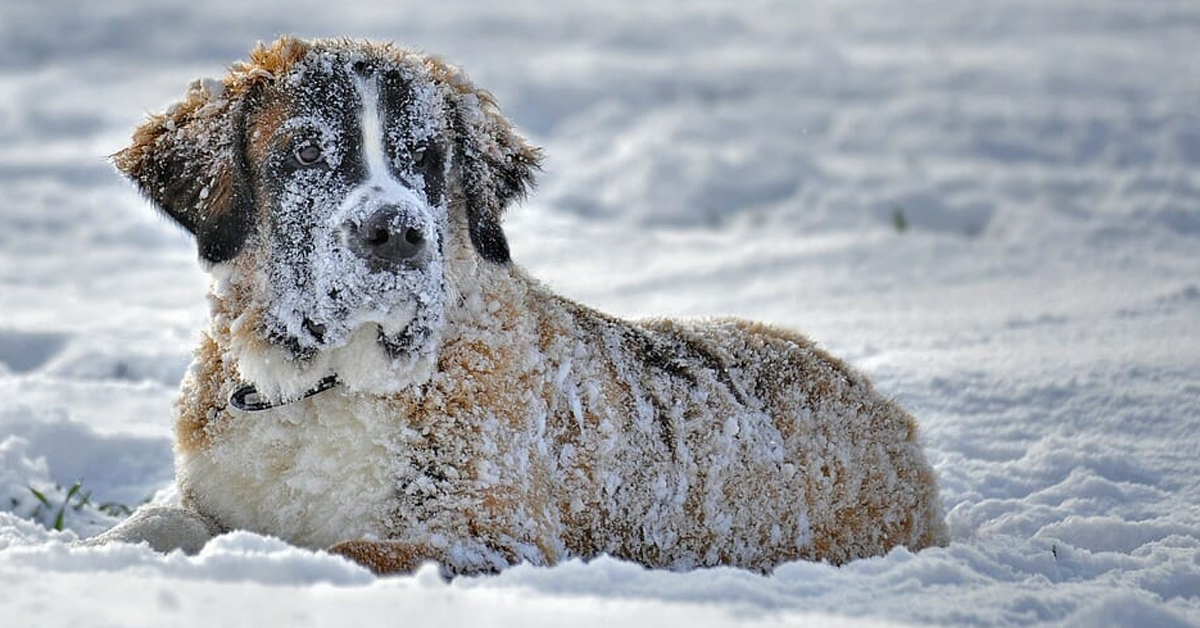 New Law Confirmed: You can now be put in jail for leaving your dog out in the cold