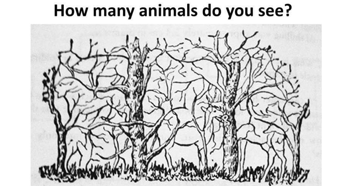 How many animals do you see? - Jesus Daily